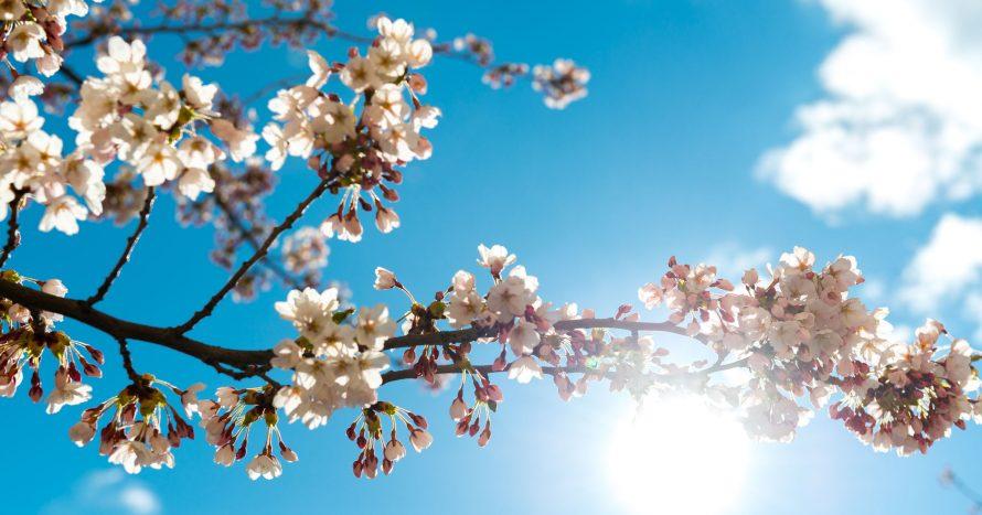 SvMS-Spring-WEBB_JohanLindsten_DSC7262.jpg